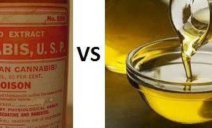 CBD Tincture vs CBD Oil