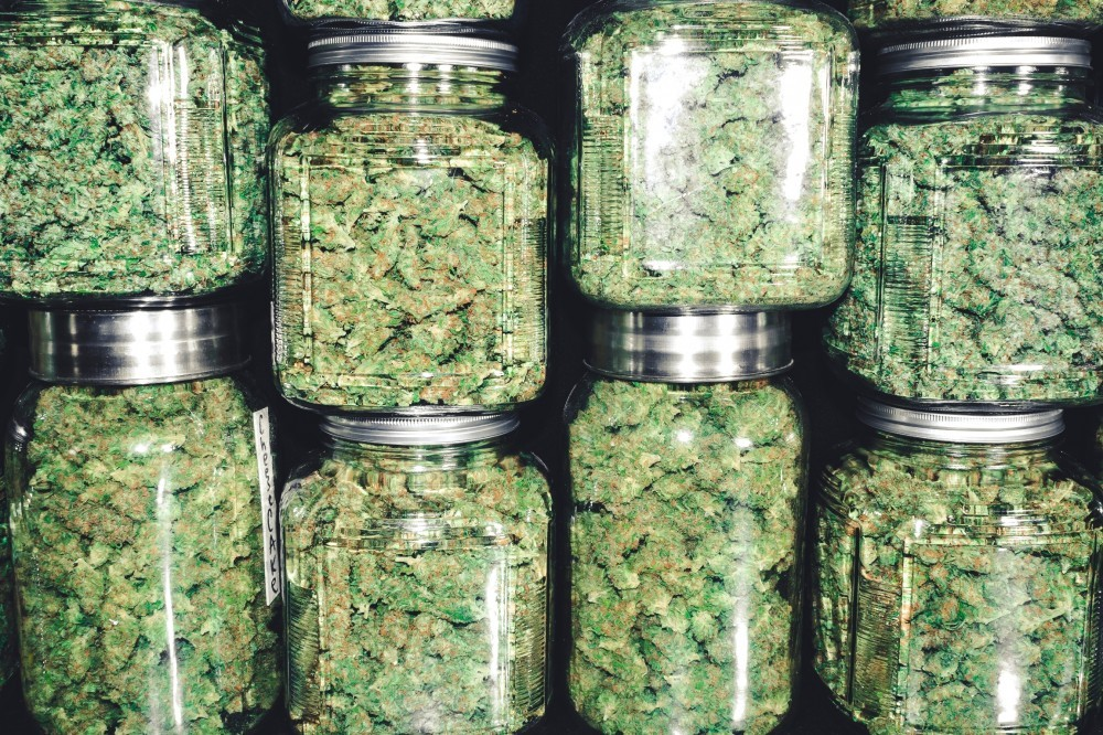 Cannabis buds in jars