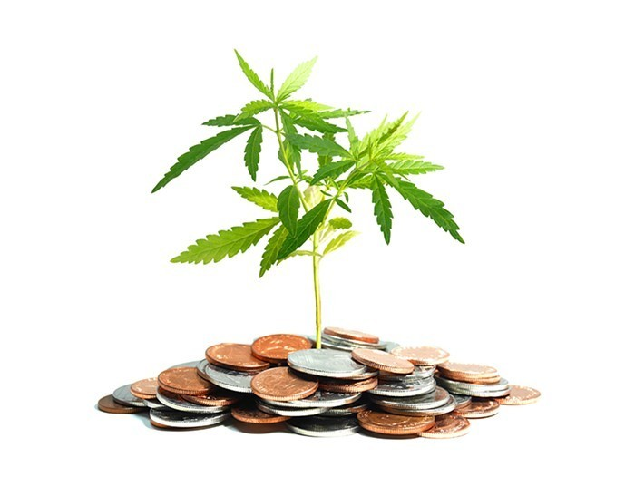 Cannabis growing from Money